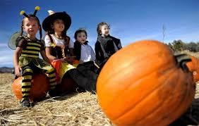 Pumpkin Patch Denver by The Denver Post Lists Corn Mazes Pumpkin Patches And Fall