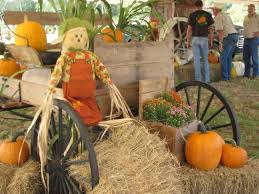Columbus Ohio Pumpkin Patches by 10 Best Pumpkin Patches In Florida