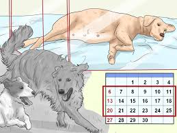 4 Ways To Deal With Puppy Deaths During Birth - WikiHow Its Going To Weird Some People Out A New Company Will Compost How Do I Keep My Backyard Free Of Murdered Possums Vermin Amazoncom 100 Wireless Pet Coainment System Wifi Radio Dog 39 Best Dealing With Loss Images On Pinterest Loss Man Admits Shooting And Burying Dog In Westside Jacksonville Bunny Rabbit Chases Around The Yard Youtube Backyard Playground Ideas For Your What Do Your Pets Remains After Death Where Bury Dead Pets Or Animals Bengaluru Citizen Matters Burying 2 Monthsold Bunny Doggie Solution Dogs Ideas