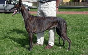 Small Dogs That Dont Shed Uk by Non Shedding Dogs A List Of Small Mid Sized And Large Dogs That