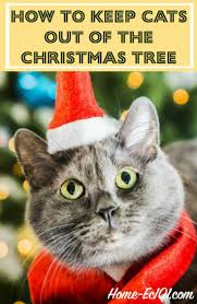 What Christmas Tree Smells The Best by How To Keep Cats Out Of The Christmas Tree Home Ec 101