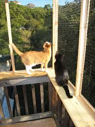 cats on deck outs and abouts catification transform the apartment balcony to