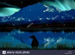 Briwn Bear Mt McKinley Northern Lights Denali NP Alaska Stock