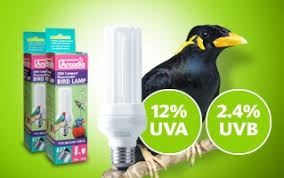 arcadia compact l bulb uv for parrots garden feathers bird