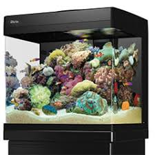 aquarium poisson prix créer un aquarium d eau de mer trouver l équilibre animalerie