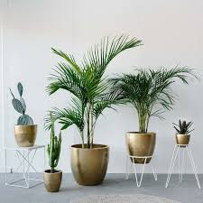 golden palm in pots garden pots add some colour to your garden with plant pots the