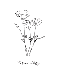 California Poppy Botanical Drawing By Masha Batkova