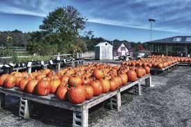 Hurricane Utah Pumpkin Patch by The History Of Halloween Phillip U0027s Natural World 1 0 3