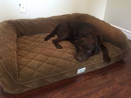 orvis deep dish memory foam dog bed daily dogs