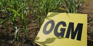chambre agriculture du gers gers des agriculteurs pourraient planter du maïs ogm sud ouest fr