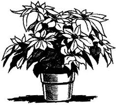 Poinsettia For Decoration Coloring Page