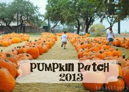 Pumpkin Patch North Austin Tx by Best 25 Pumpkin Patch San Antonio Ideas On Pinterest San
