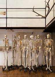 Skeleton Crew: The Bones And Bodies Behind RISD's Nature Lab | Audubon Animal Logic Richard Barnes Mods Johnny Moke Jan Mcveigh Claire Walmsley Richdbarnes01 Twitter Gallery Of Tampa Museum Art Stanley Saowitz Natoma House 1532 Fougeron Architecture 15 Marion Brenner Photographer Archdaily Unabomber The Beekman A Thompson Hotel Robb Report Narrative His Mother Dreamed Having Her Own Family South Artist Fujiko Nakaya Shrouds Philip Johons Glass Richdbarnes1