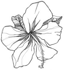 936x1024 Beautiful Flowers Drawing Easy Of Flower