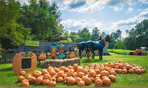 Mccalls Pumpkin Patch Haunted House by Mccalls Pumpkin Patch Home Facebook