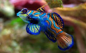 poisson eau douce aquarium tropical arrivages réguliers l aquarium villers semeuse