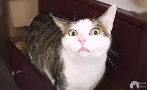 mon fait pipi sur le canapé mon fait pipi ou caca partout que faire absolument chats