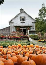 Pumpkin Patch Indiana County Pa by Bucks County Pa Traugers Farm This Is Halloween Pinterest