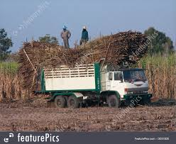 100 Northeastern Trucks Agriculture And Forestry Truck Loaded With Sugarcane Stock