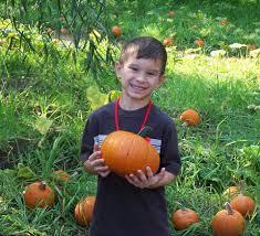 Pumpkin Patch Fresno Ca Hours by Pumpkin Grove Pumpkin Patch Home Facebook