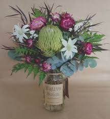 100 Flannel Flower Glass Native Bunch Australian Native Flowers Flower