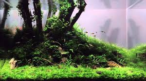 Lonely Tree Aquascape By Tibor Szecsei - YouTube Photo Planted Axolotl Aquascape Tank Caudataorg New To Hobby Friend Wanted Make An For As Cheap Basic Forms Aqua Rebell Huge Tutorial Step By Spontaneity James Findley Aquascaping Videos The Green Machine Aquarium Beautify Your Home With Unique Designs Aquascape Waterfall Its Called Strenght Of A Thousand Stone Youtube September 2010 The Month Sky Cliff Aquascaping 149 Best Images On Pinterest Ideas Advice Please 3ft Forum