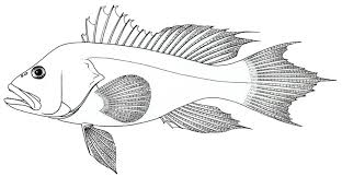Fish Coloring Book Pdf Printable Pages For Adults Colouring Books Download Large Size