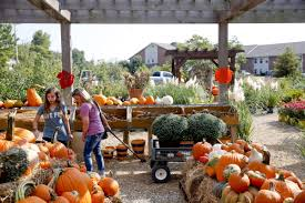 Sand Springs Pumpkin Patch by Pumpkins Are Ready For Fall Decorations From The Miniatures To
