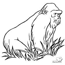 Dibujo De Nutria De Río En El Zoológico Para Colorear Dibujos Para
