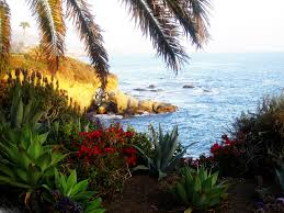 View California Flowers Palmtrees Nice Beach Laguna Trees Wallpaper Tumblr