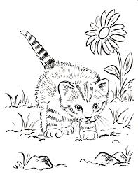 Creative Cute Cat Coloring Pages Along Unusual Article