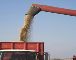 Why Grain Test Weights Matter | CropWatch | University Of Nebraska ... All About Farm Trucks Grain For Sale Truckpapercom 1981 Chevrolet C70 Grain Truck Item J89 Sold April 27 1989 Kenworth T600 Da5771 Decembe Ford L Series Wikipedia Mack Tractor Cmialucktradercom Gmc Grain Silage Truck For Sale 11855 Used 3500 Chevy New Lifted 2015 Silverado Truck Related Keywords Suggestions Long Tail 1964 F750 Highway 61 Promotions Diecast 1946 116 Scale 1961 Intertional 195a Dd8342 Au