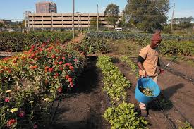 Growing Chicago A flourishing city in a garden Chicago Tribune