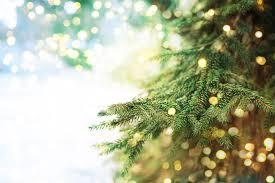 Christmas Tree Lot Cradle Of Hope 12 2 Our Lady Grace Catholic Church