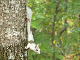 Piebald Squirrel In Bent Tree   A Bent Tree Voice Expert Claims Mysterious Bent Trees Were Secret Native Americans Crooked Forest Wikipedia Stp77089 Greenery And Tree Trunks In Forest Karjat Mahashtra Indian Bent Trees History Or Legend Show Me Oz Larry The Lorry More Big Trucks For Children Geckos Garage New Trucks Bodies Equipment Trailers Seen At Wasteexpo How To Fix A Leaning Tree I Love The Wooden Beds Rarin To Go Ford Mysterious Are Actually American Trail Markers Wind Stock Images 542 Photos Bend Diamonds Ieee Spectrum Black White Alamy