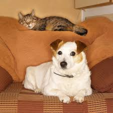How to Keep Cats Away From Furniture Pets
