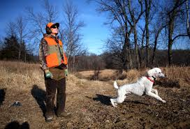 Best Hunting Dogs That Dont Shed by That Dog Hunts Yes Poodles Do Startribune Com