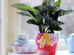 plante verte dans une chambre à coucher quelle plante pour quelle pièce femme actuelle