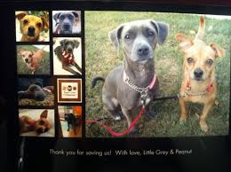 Why Adopt? - Sita's Dog Sanctuary & Rescue Breeding Cception To Birth Three Creek Australian Spherds Latest News New Orleans Louisiana Spca 17 Best Aspca Images On Pinterest Animal Rescue Rights Breeders Backyard And Puppy Mills What Is The Difference Signs Of A Breeder Its Dog Or Nothing Image With Fabulous Puppies Trapped In Dirty Are So Happy To See Their Rescuers Rescuogsfrombreeders Breed Gallery Red Flags Warning When Dealing With A Article Why Adopt Sitas Sanctuary Rescue From Mill Being Sold In Pet Store Puppy Remy Griffon For Love Of Animals