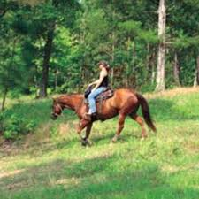 Riding Horses On Hills Expert Advice On Horse Care And Horse Riding