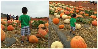 Oklahoma Pumpkin Patches by Ok Pumpkin Patch