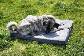 hundebetten wir testen den perfekten schlafplatz