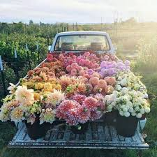 Truck Bed Covered In Flowers