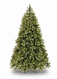4ft Christmas Tree Uk by 7ft Pre Lit Bayberry Spruce Feel Real Artificial Christmas Tree