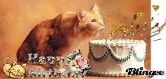 happy birthday cat 14
