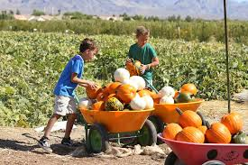 South Reno Pumpkin Patch by Check Out The Pumpkins At Gilcrease Orchard U2014 Photos U2013 Las Vegas