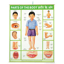 Chart Of Body Parts With Names Human Part Body Name 11133 97467 6