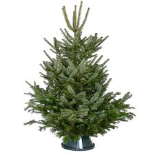 10ft Christmas Tree Uk by Nordmann Fir Real Christmas Tree Christmas Forest