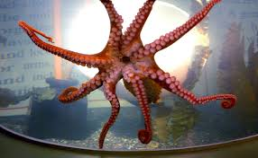 Octopus Garden Set to Blossom At Sea Life Centre in Brighton