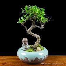 großhandel 20 stücke banyan baum samen bonsai löcher wohnzimmer saug formaldehyd pflanzen topfpflanzen anti strahlung ginseng feige immergrünen